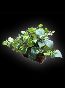 Plant Camera